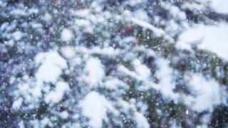 雪があまり降らない地域では、雪の日の「在宅勤務」を許可するべき。