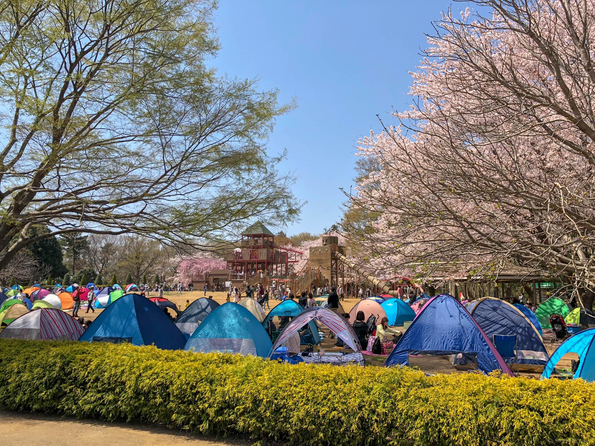 千葉県船橋市の「ふなばしアンデルセン公園」でお花見