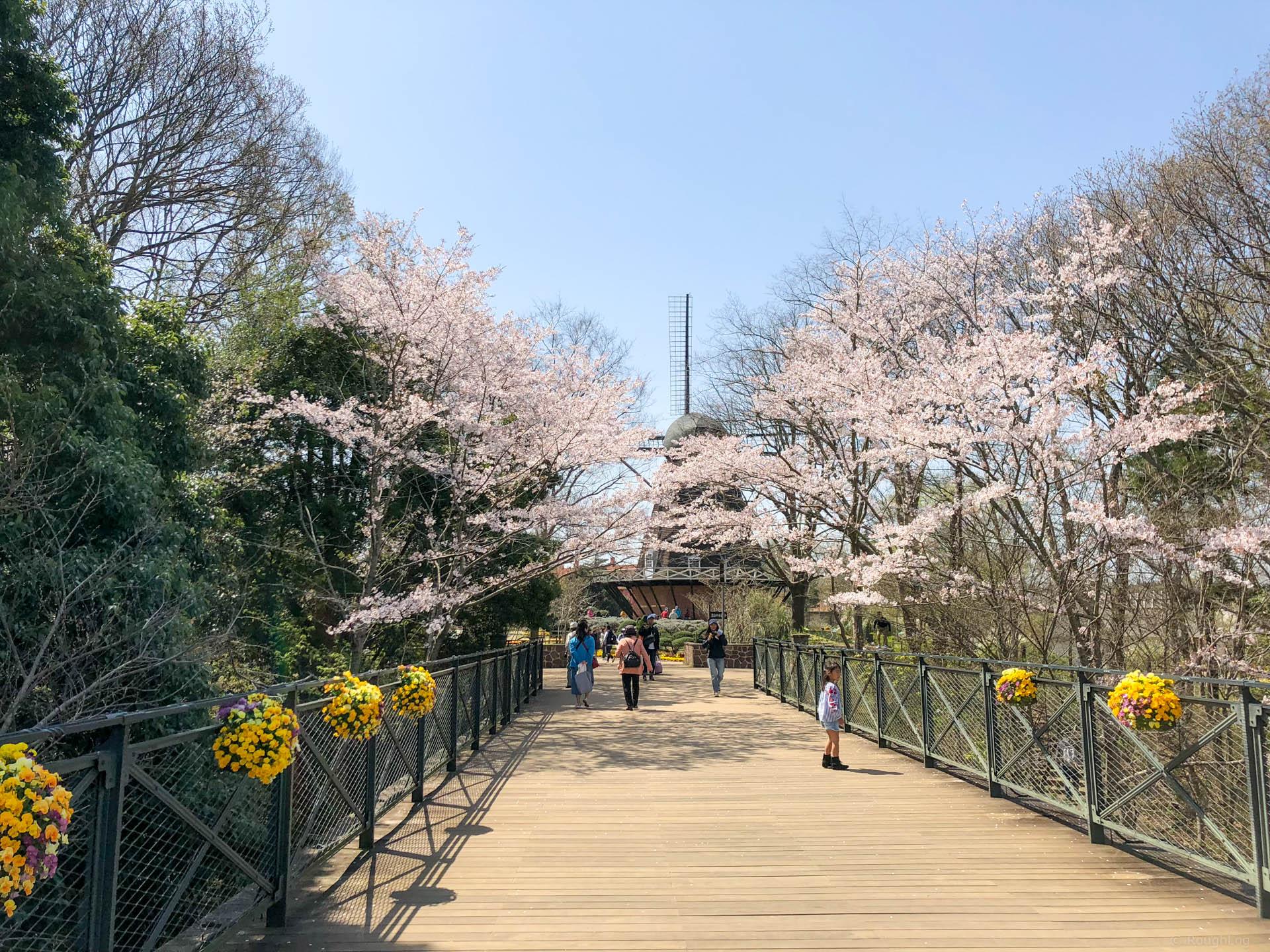 千葉県船橋市の「ふなばしアンデルセン公園」太陽の橋と桜