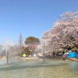 千葉県船橋市の「ふなばしアンデルセン公園」の桜と虹の池
