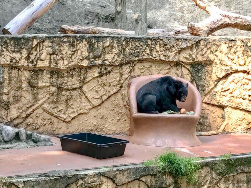 多摩動物公園のツキノワグマ