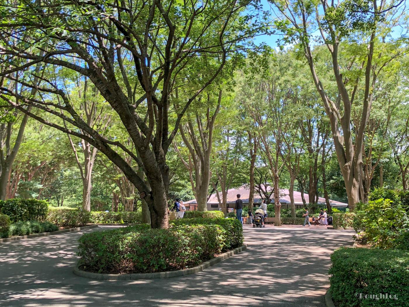 大きな木々が並んでいて木陰が気持ちいい
