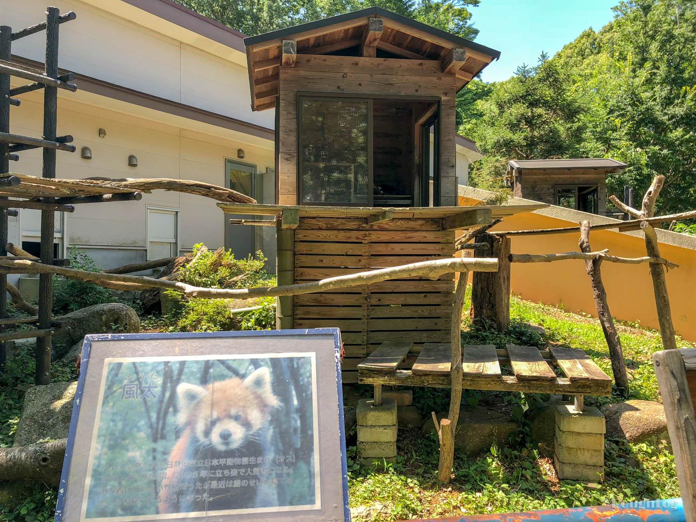 千葉市動物公園といえばレッサーパンダ風太(ふうた)