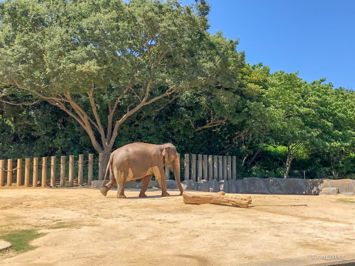 千葉市動物公園の草原ゾーンにいる象